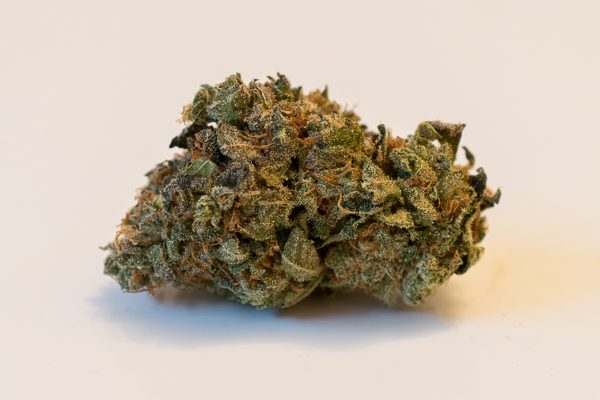 A bud of Locomotion marijuana.
